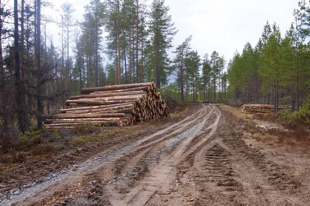 Normaal gesproken een goed begaanbare bosweg. Op de foto ziet het er niet zo erg uit als het is.