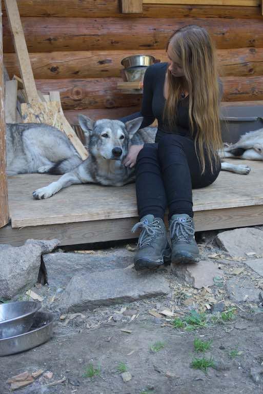 Ook wolfhonden laten zich aaien