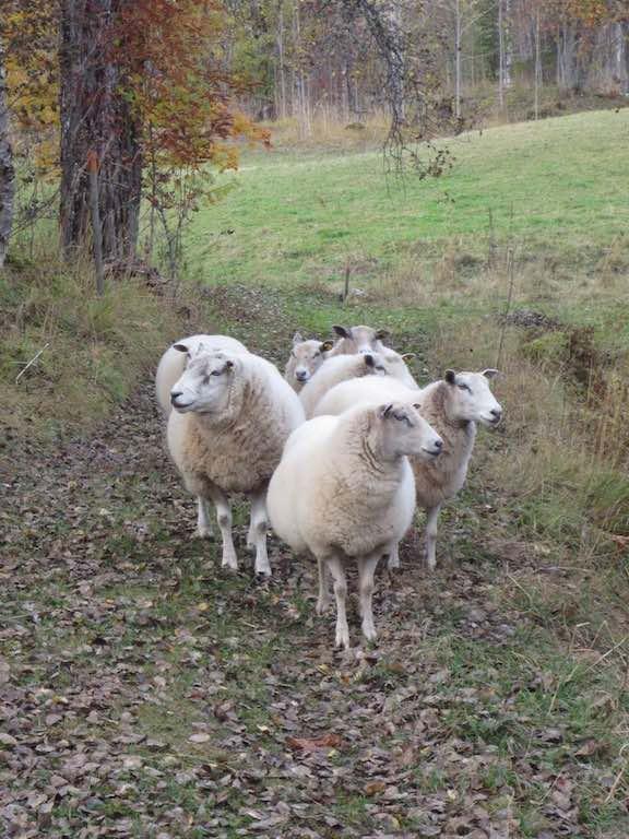 Suzanne stond even op een informatiebord te kijken toen deze dames aan kwamen rennen.